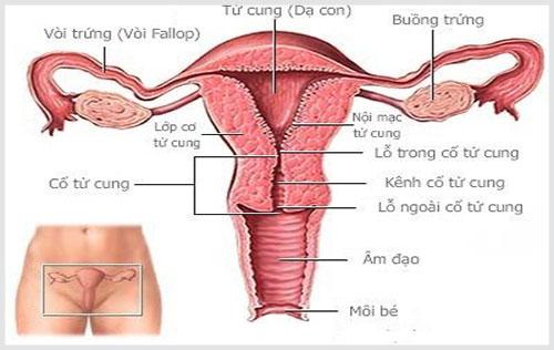 Tác hại khôn lường của bệnh viêm cổ tử cung ở nữ giới